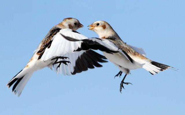 birds-dancing_2226555k